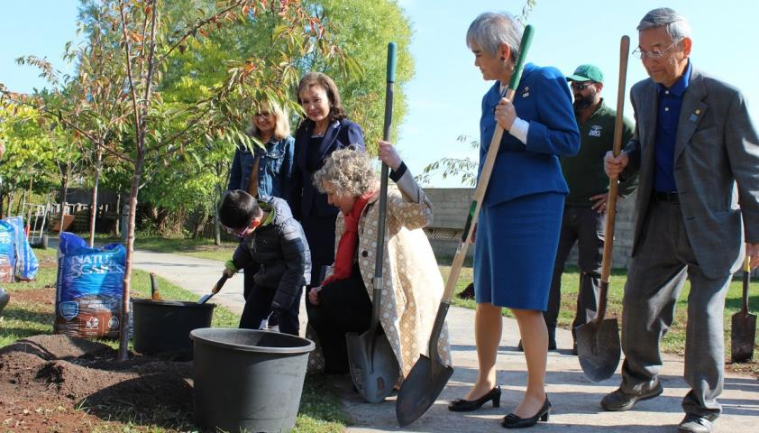 Tree planting with members of the Rotary Club of Toronto Forest Hill and Consul-General of Japan in Toronto